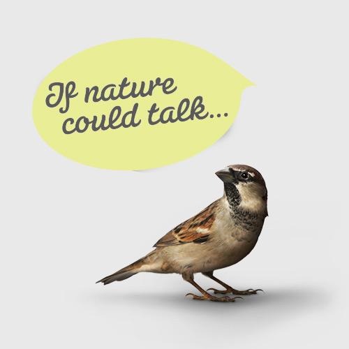 NOUVELLE SOFT – BIRDVERTISING
