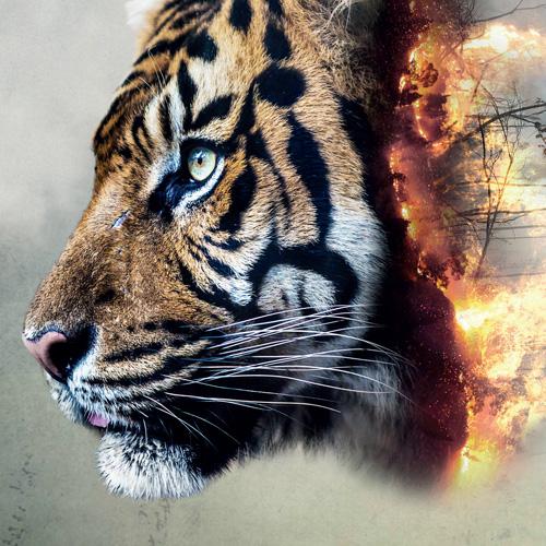 Greenpeace -Not every cat has nine lives