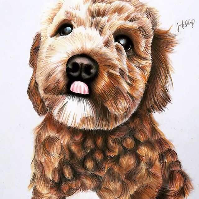 😛😛😛 . . .  #illustration #prismacolor #dogsofinstagram #dogdrawing