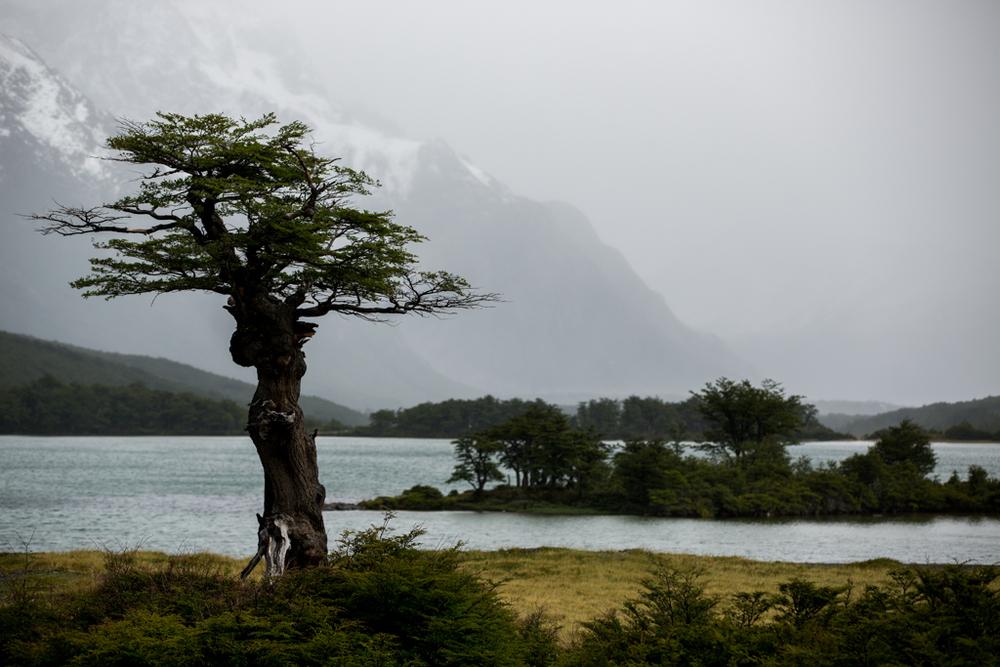 Single tree in rainy weather