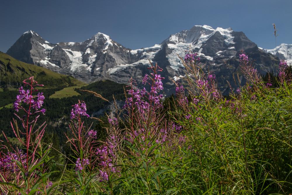 Eiger northface in summer