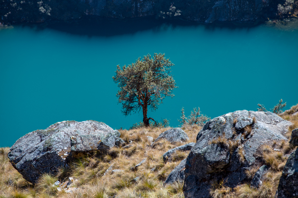 Lake Azulcocha with single tree