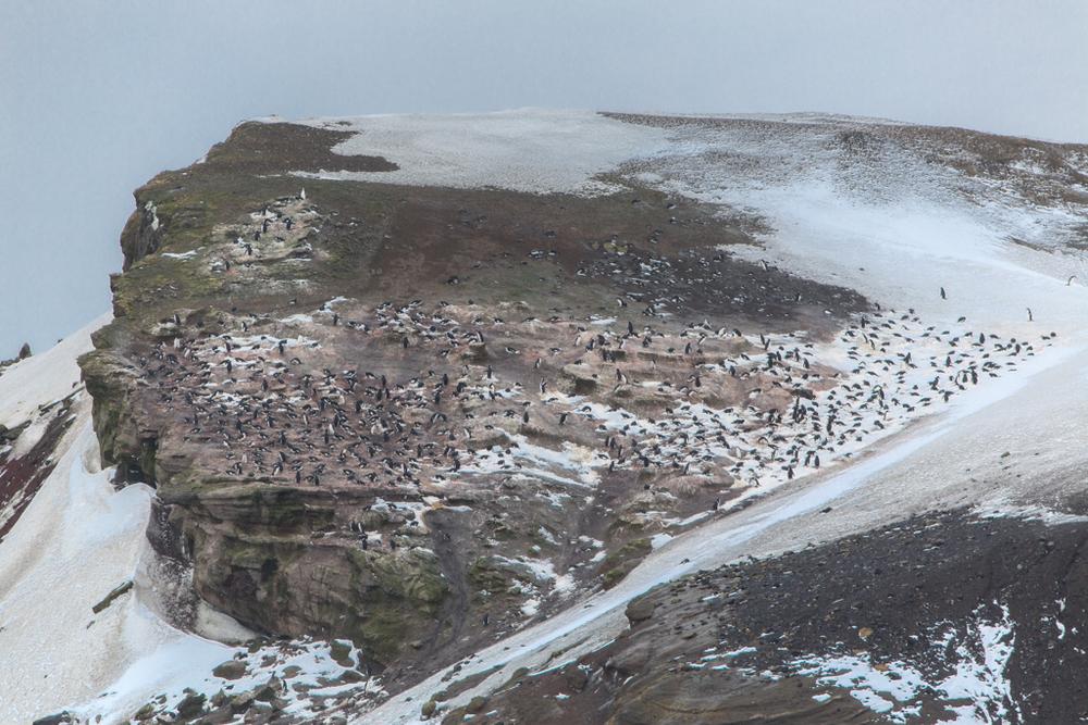 Penguins on Deception Island