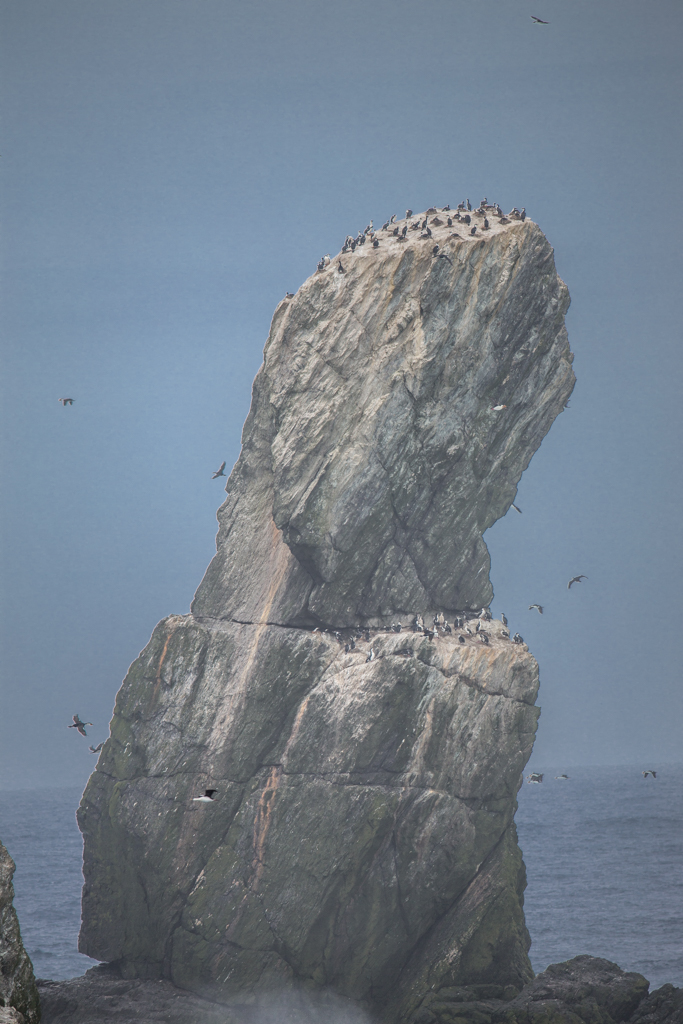 Bird colonies on Shag Rocks