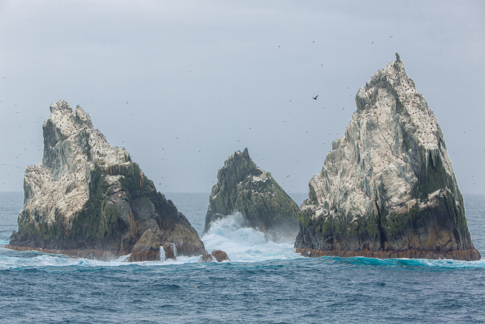 Nice formation of Shag Rocks