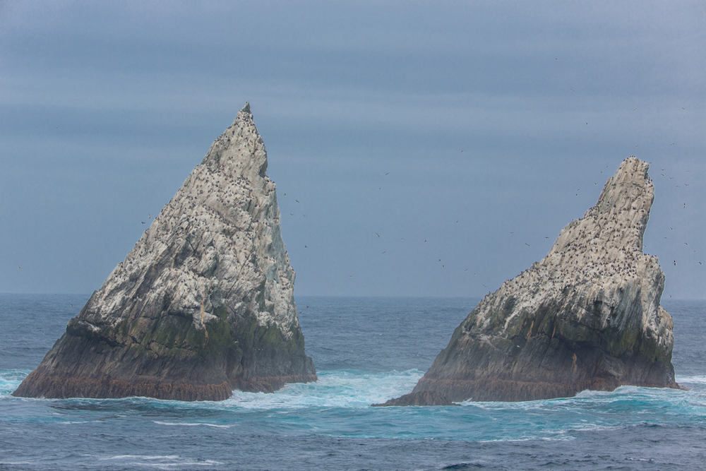 Two spikes of Shag Rocks
