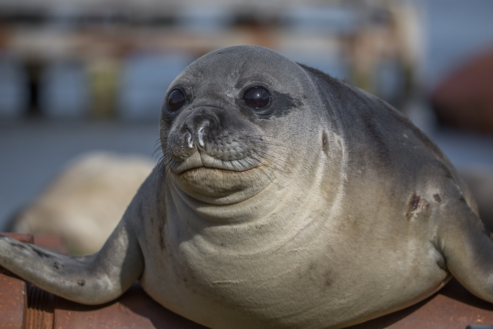 Little, cute seal