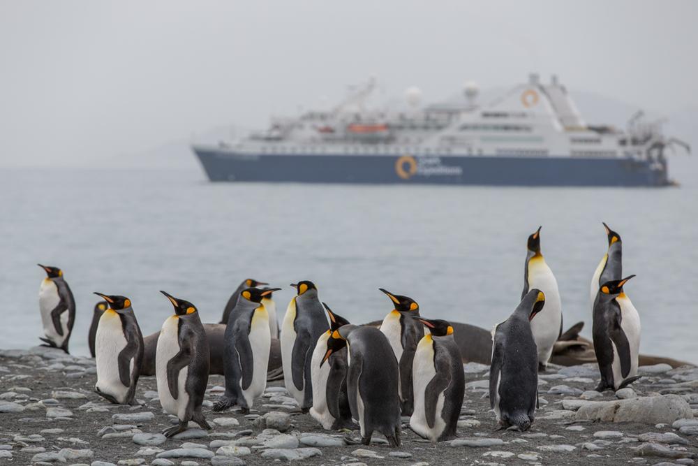 Ocean Diamond with penguins
