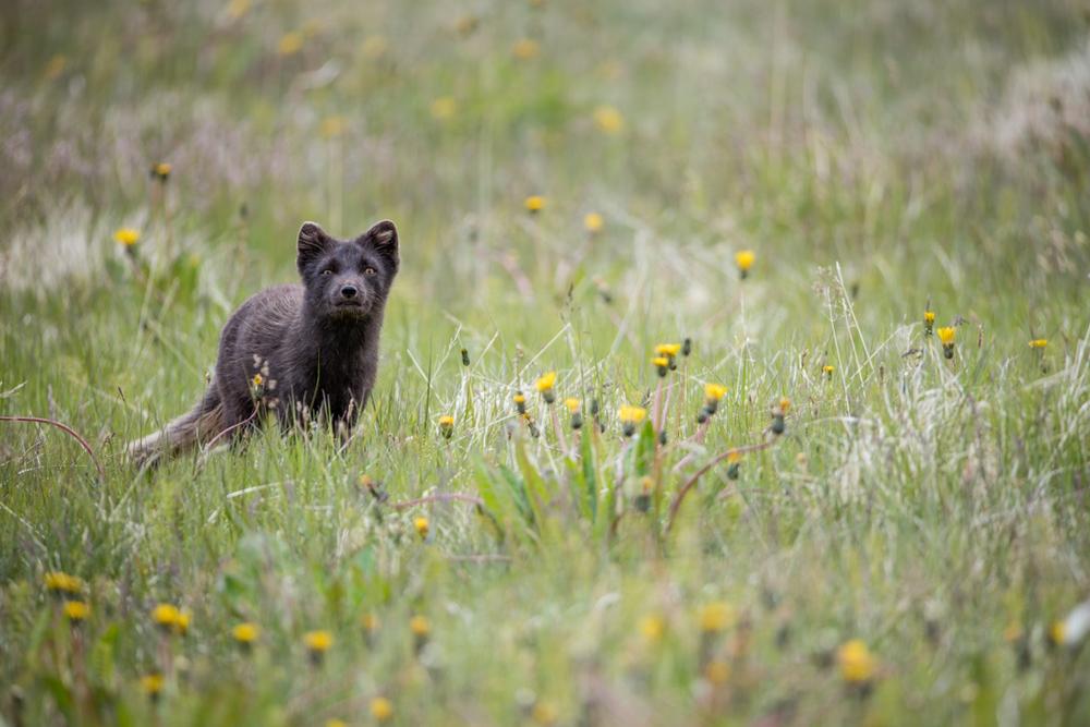 Wildlife_57.jpg