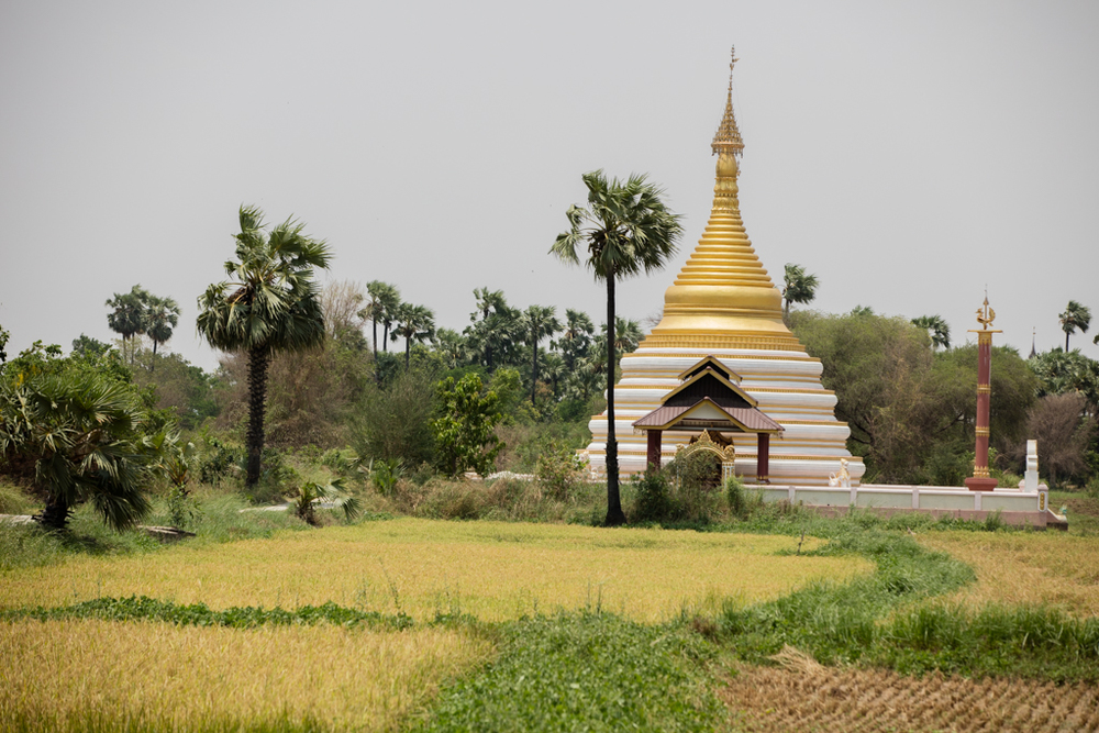 Farming inbetween pagodas