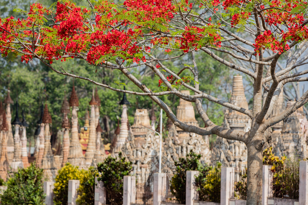 Kakku pagodas with red flowers
