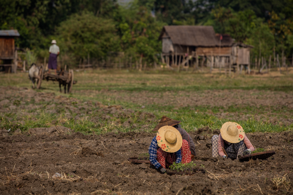 Farmers in Sankar / Myanmar