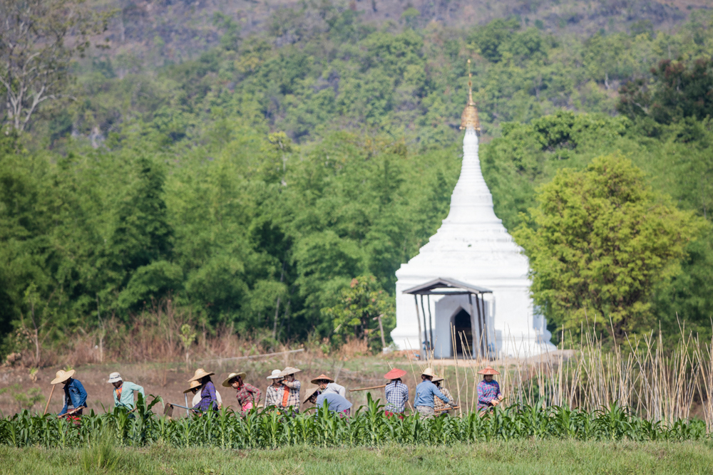 Farmers with stupa at Inle Lake