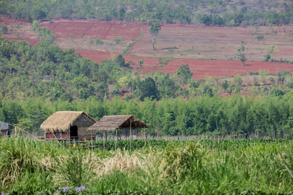 Stilt houses and red fields