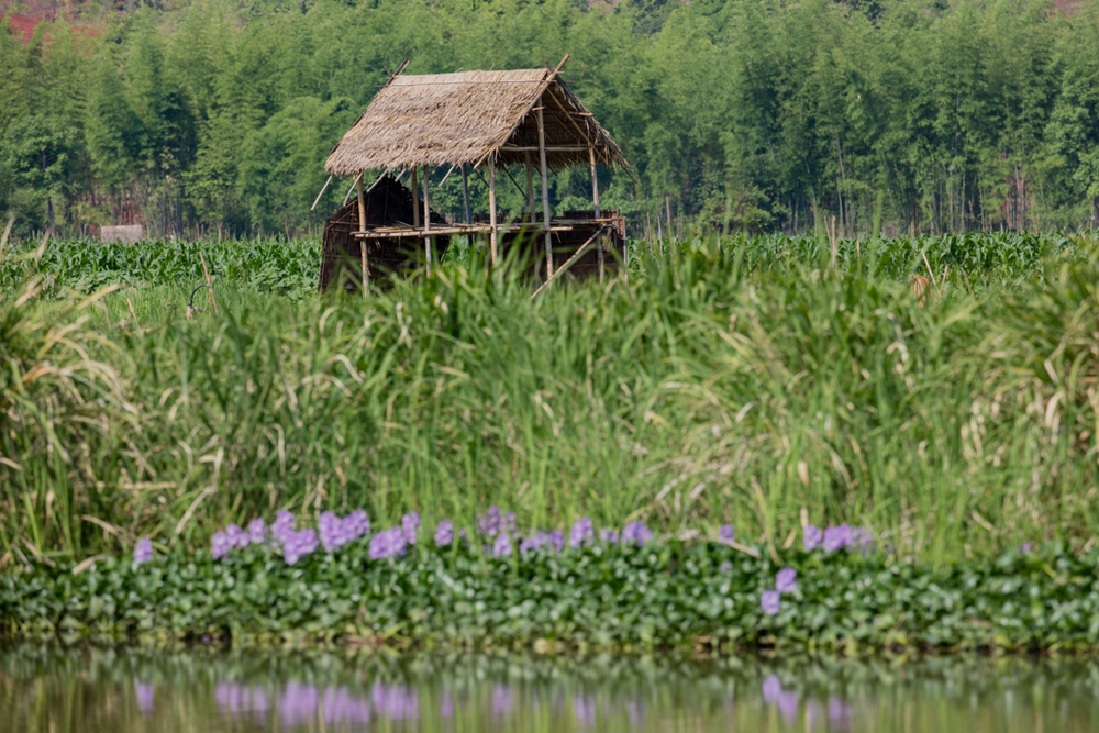 Stilt house with violet flowers