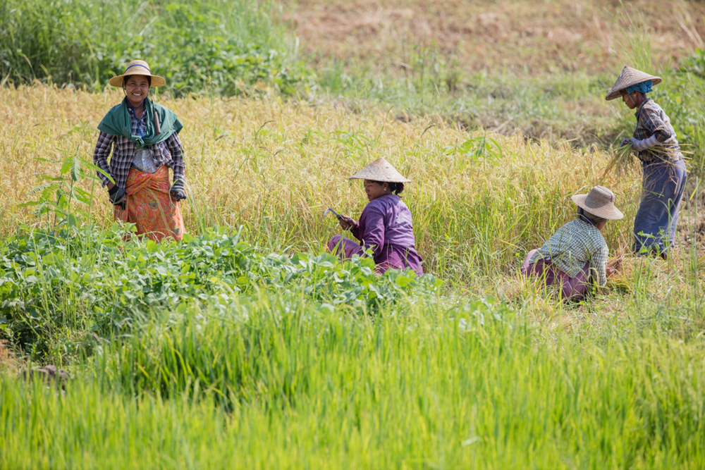 Farmers in Myanmar
