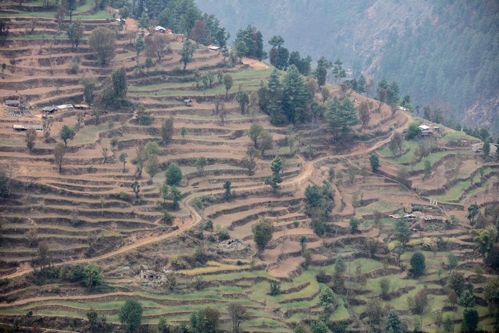 Terrace cultivation in Nepal
