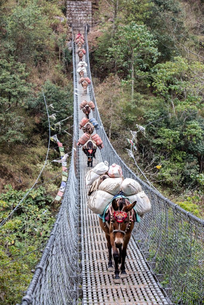 More mules on bridge