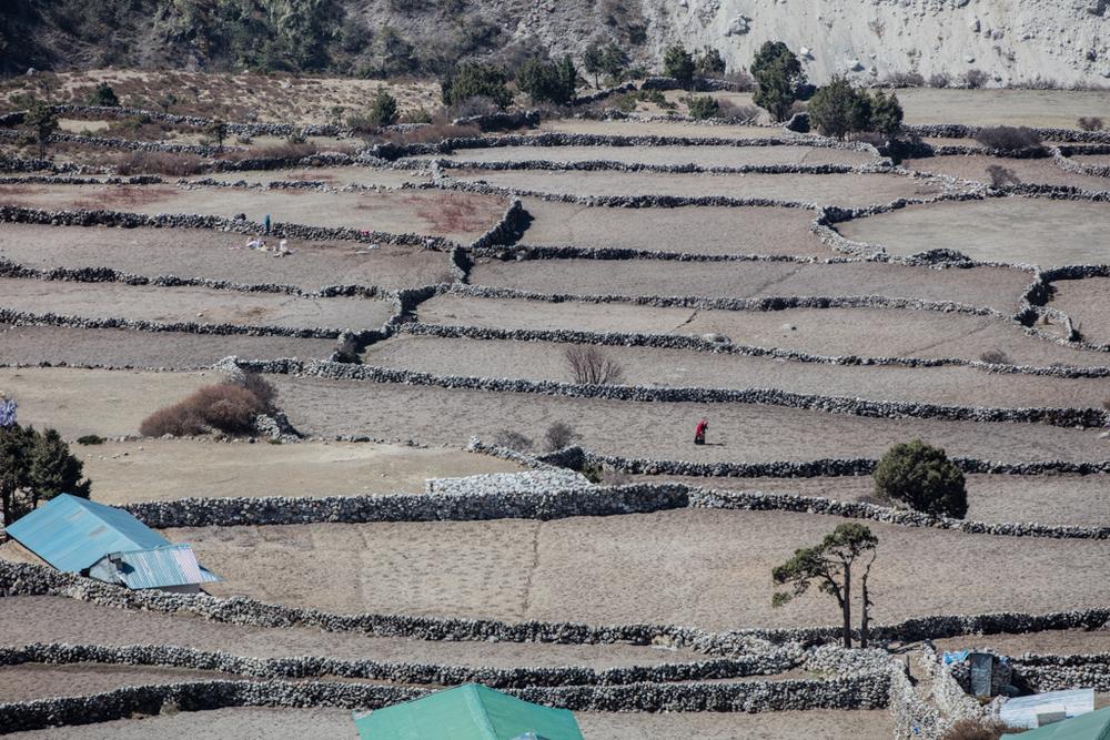 Terraces below Pangboche (3900m)