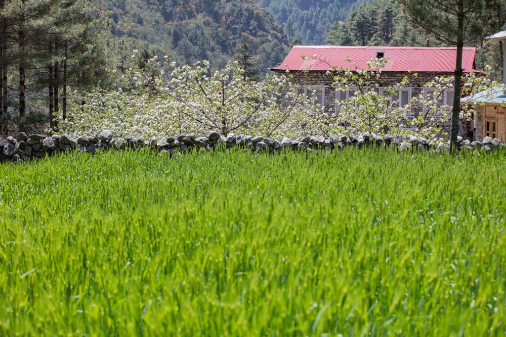 Green field in Toktok
