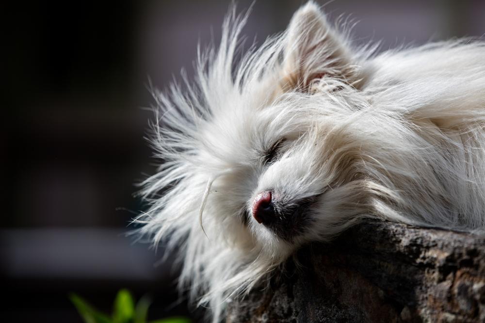 Dog at lodge in Lukla