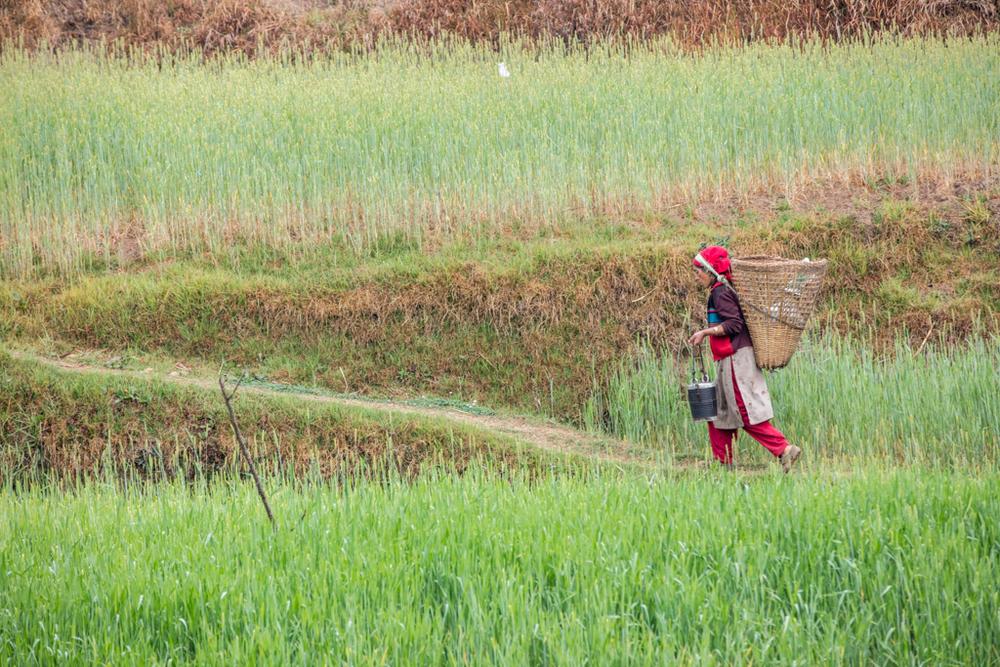 Farmer in Nepal