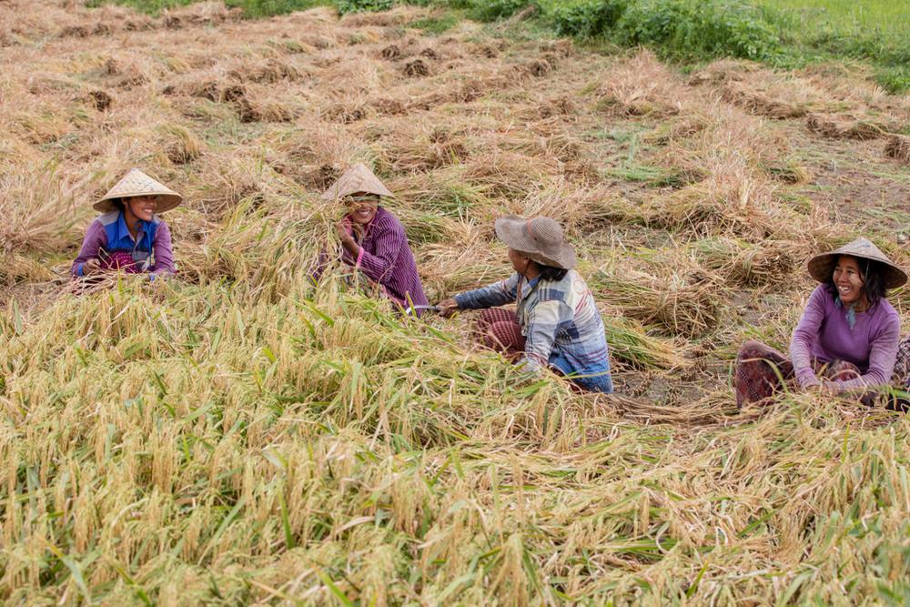 Farmers in Myanmar