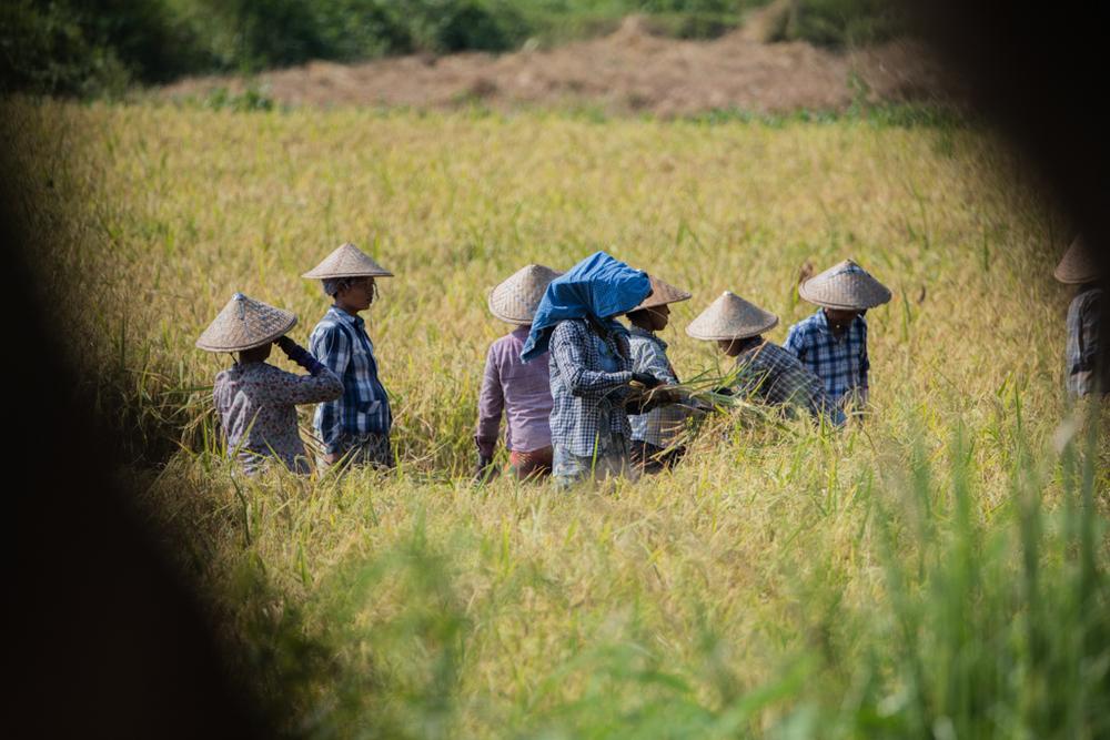 Group of farmers in Myanmar