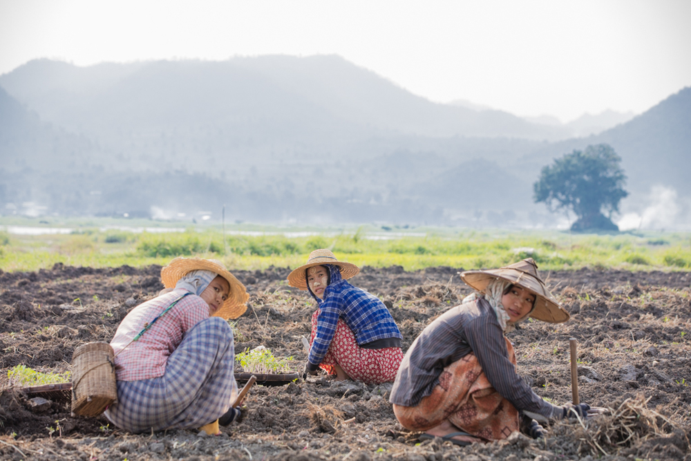 Farmers at work in Myanmar