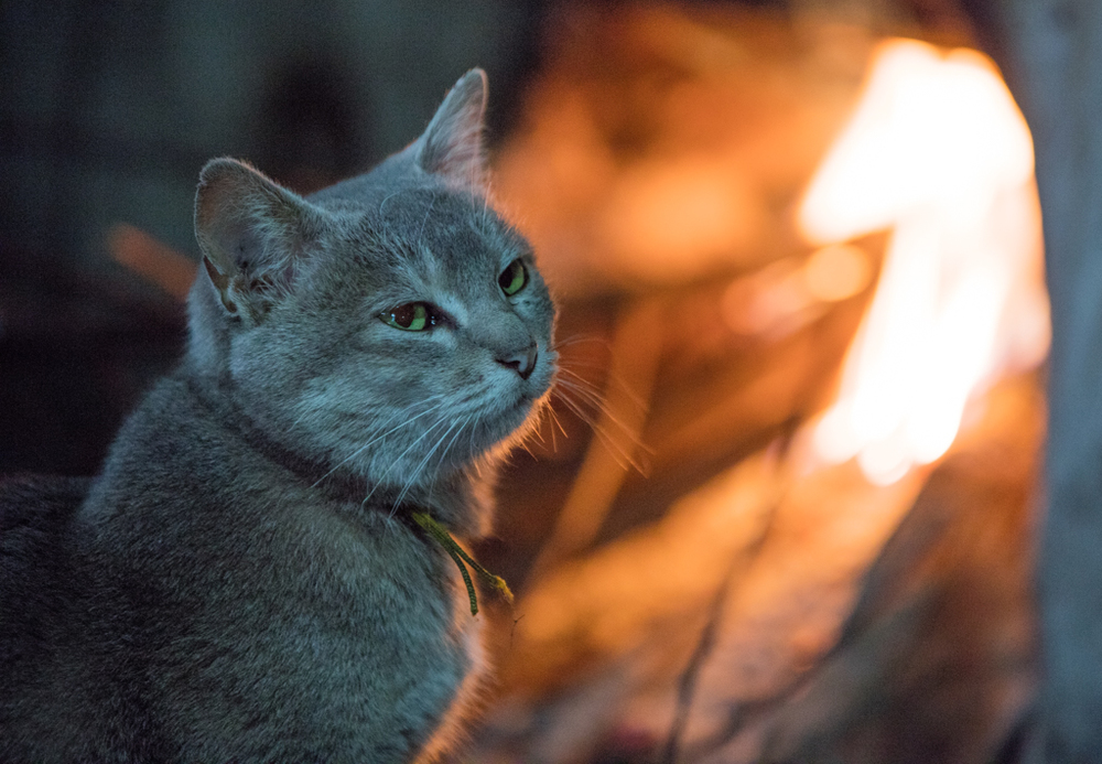Cat near hot fire