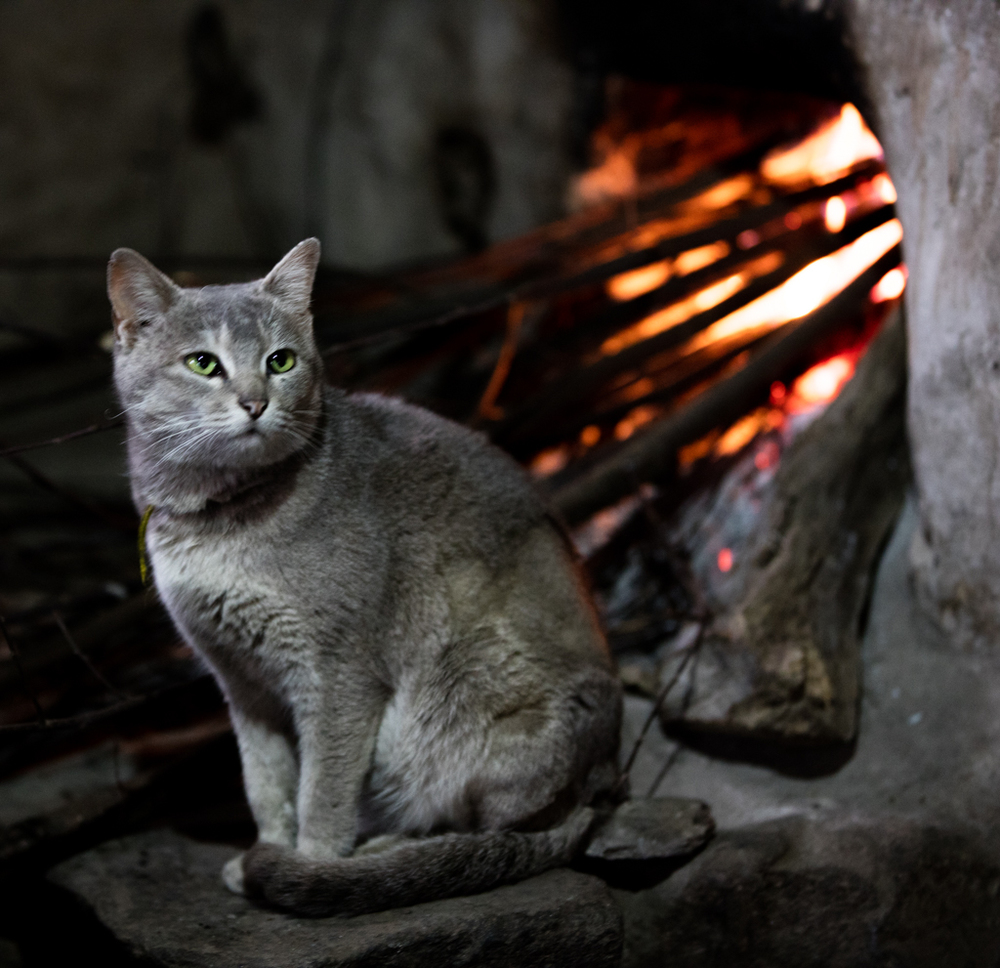 Cat close to hot oven
