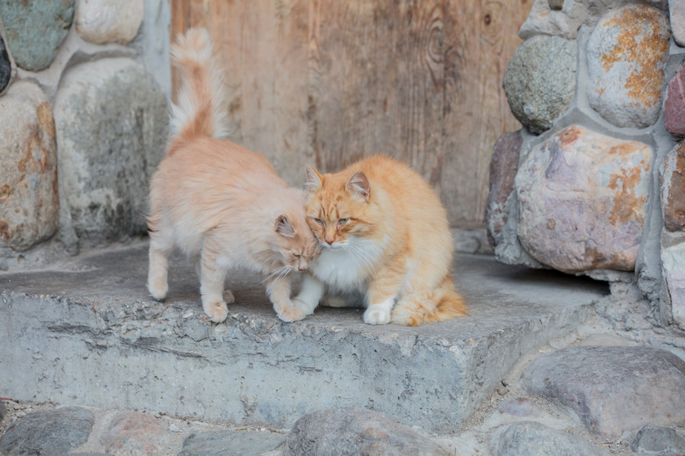 Loving cats in Heliopark Suzdal in Russia