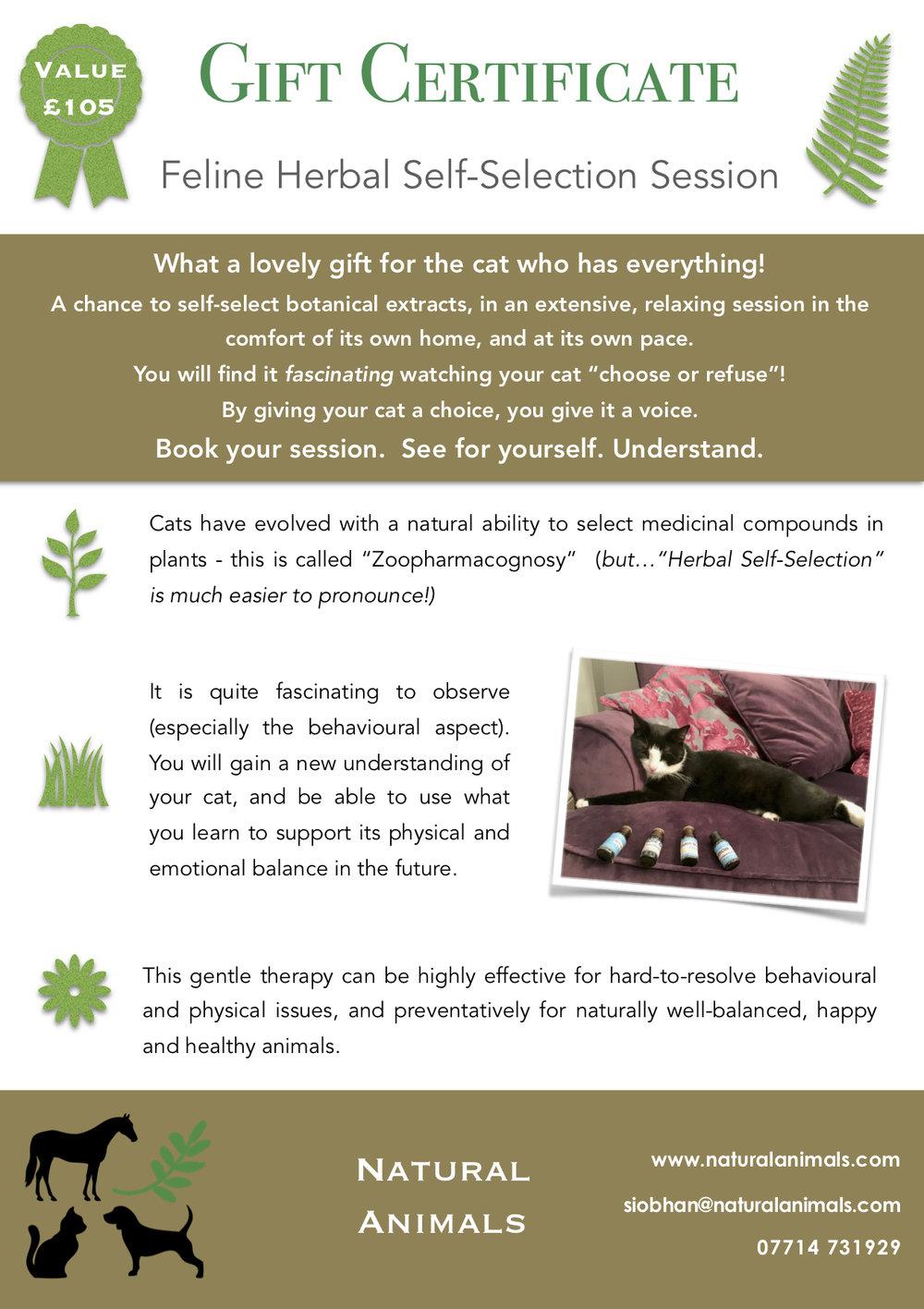 A5 NA Feline Gift Certificate P1.jpeg