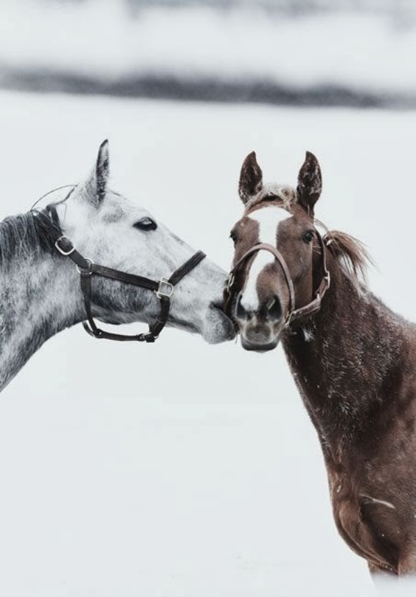horse+2.jpg