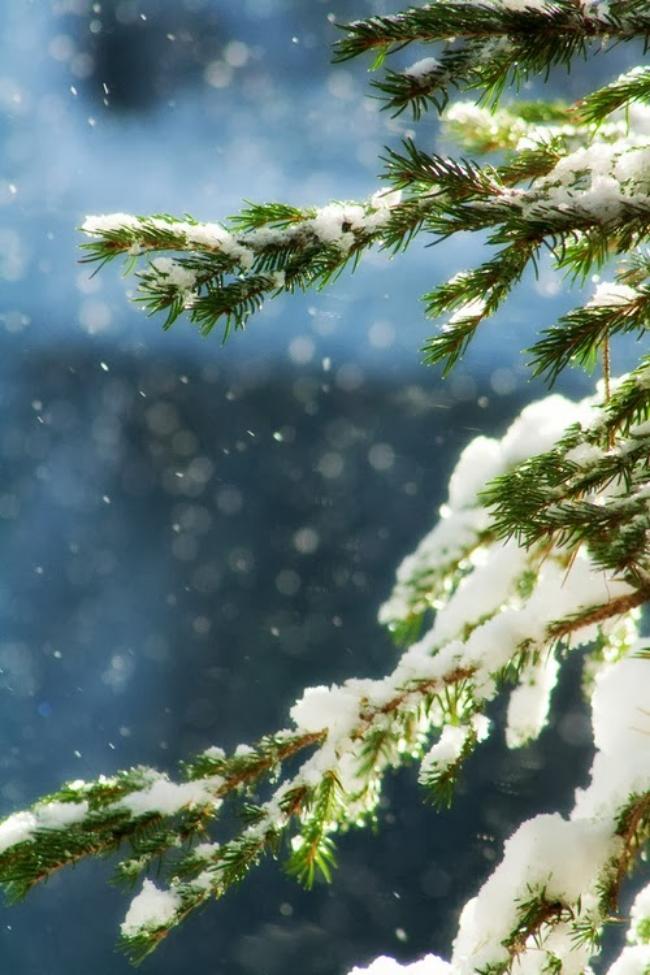 Christmas+Cheer+5.jpg