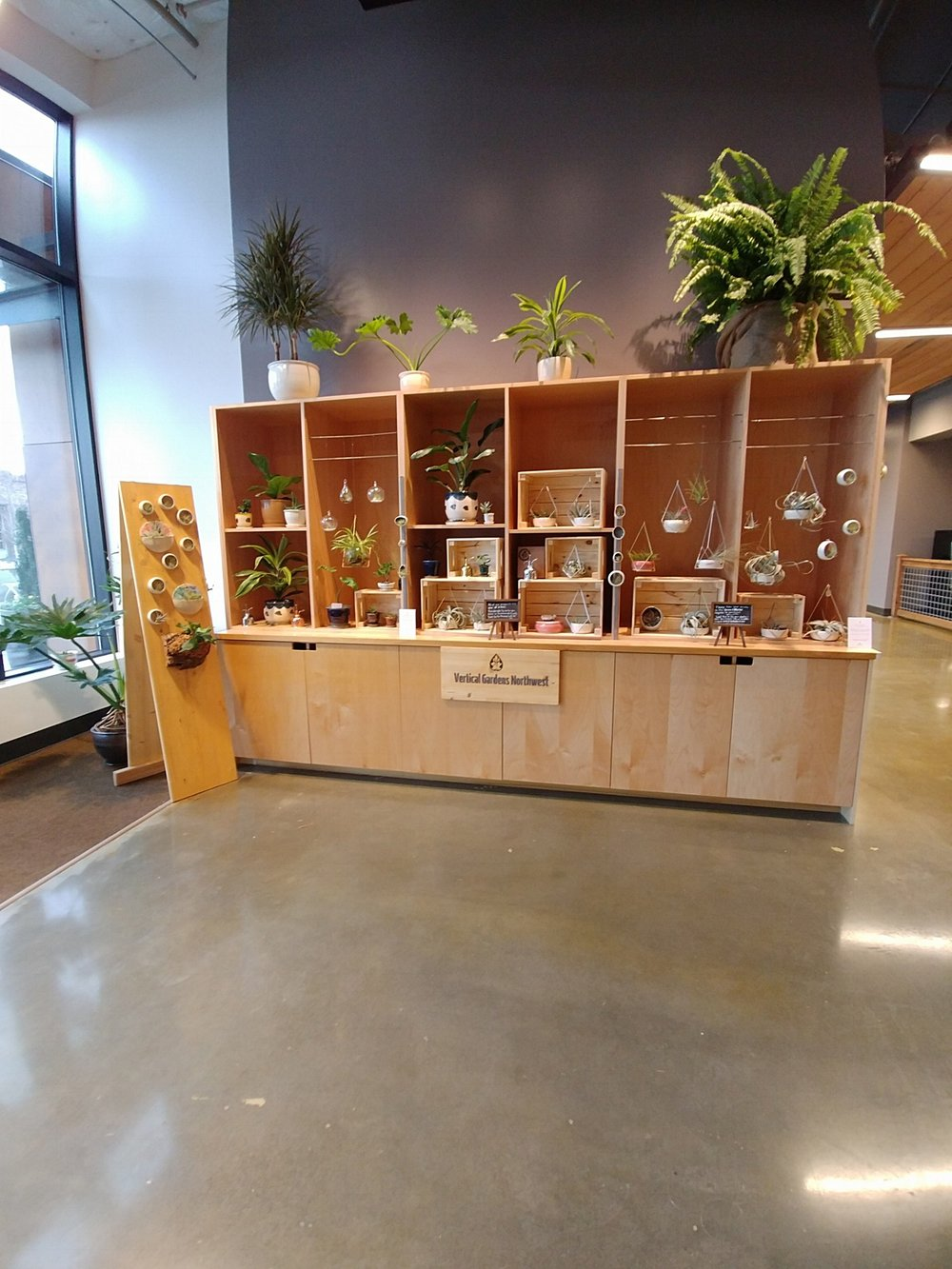 Storefront at 2900 Grand Ave., Everett WA 98201, plants, planters, airplants, indoor