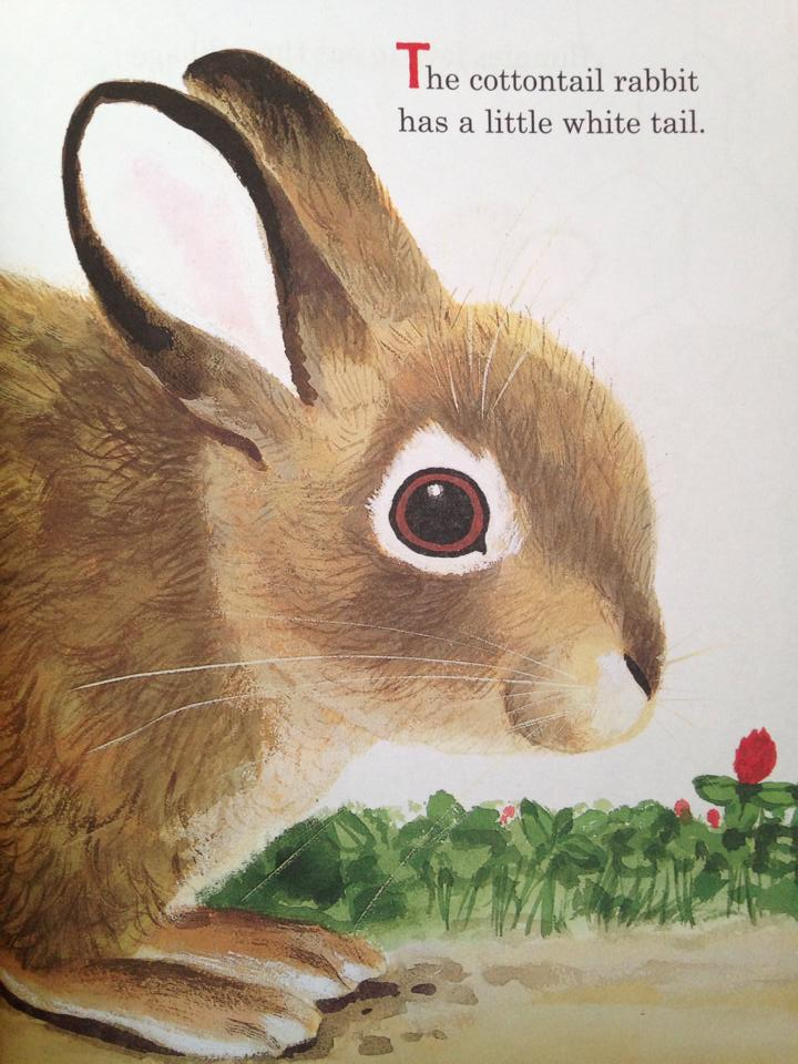 the best bunny book ever 2.jpg