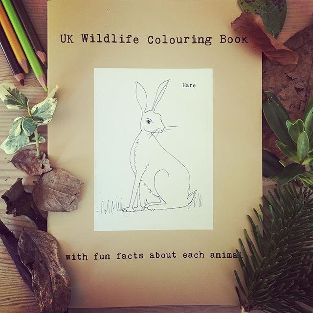 UK wildlife colouring book dec 2016.jpg