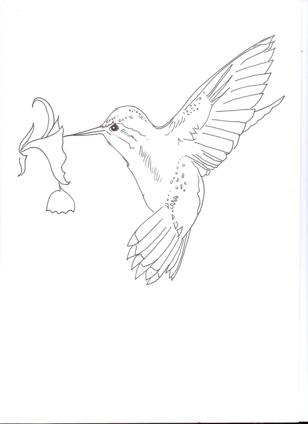 sarah lovell hummingbird