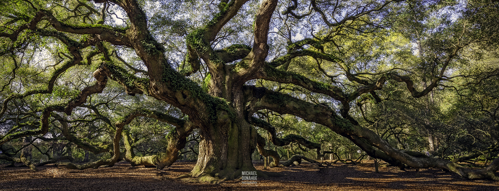 Angel Oak, Charleston SC. Photo By Michael Donahue