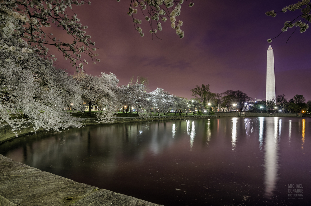 Cherry Blossoms at Twilight by Michael Donahue