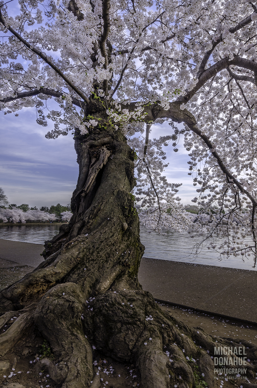 Twisted Blossom Tree by Michael Donahue