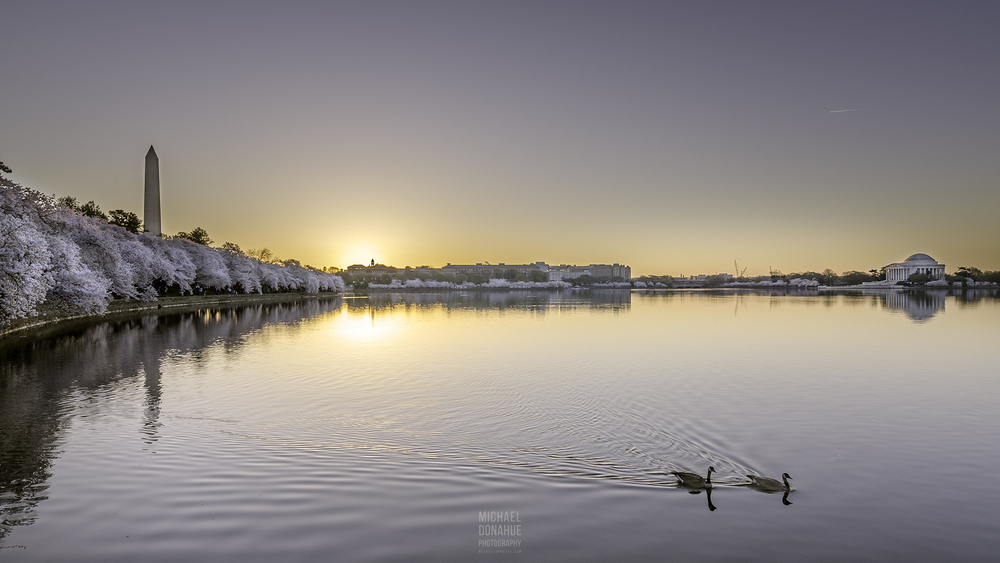 Geese At Sunrise by Michael Donahue