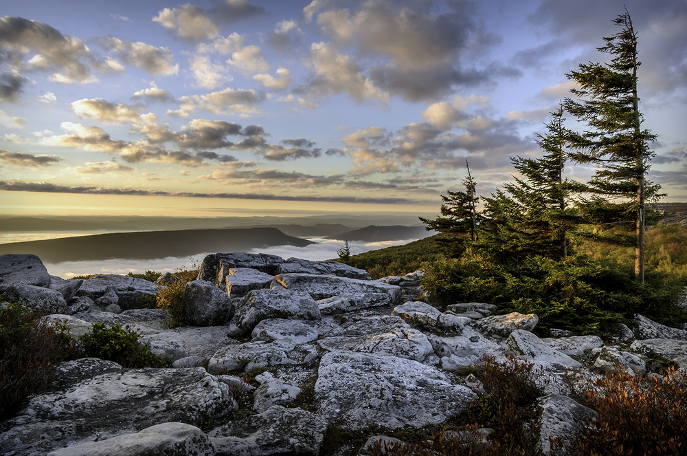 Morning In Dolly Sods