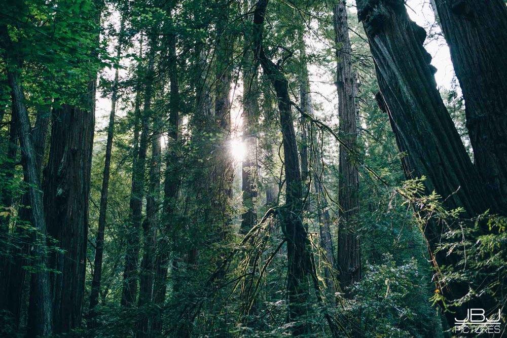 Wedding Muir Woods by JBJ Pictures Professional Wedding Photographer San Francisco-18.jpg
