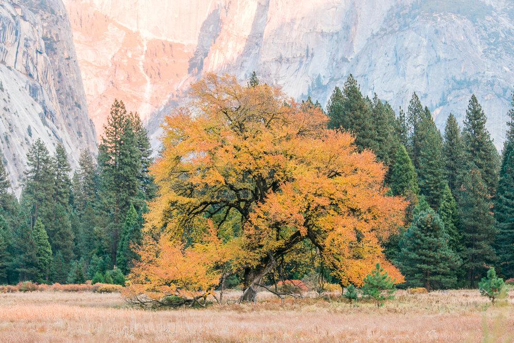 Yosemite-Photos-JBJ-Pictures (15).jpg