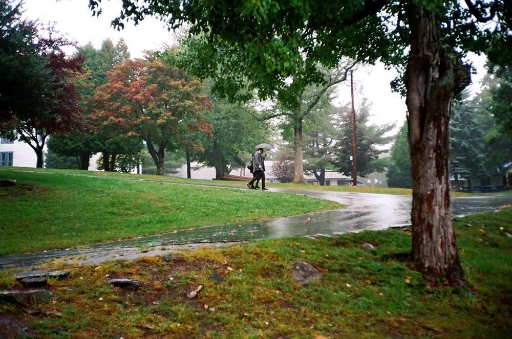 rain field by luis.jpg