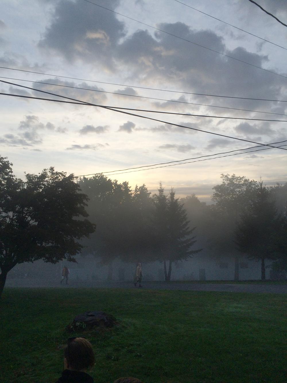 trees fog by Molly Smith.jpg