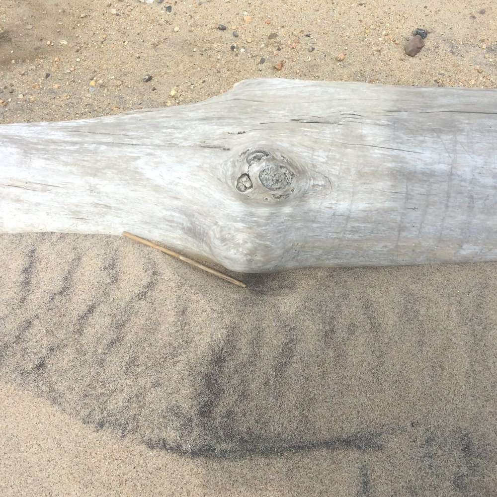 Drift wood.jpeg
