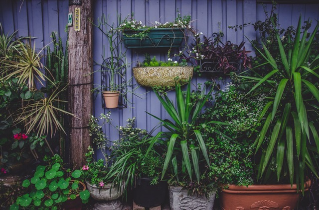 4 (surprisingly) cheap and easy ways to improve your garden